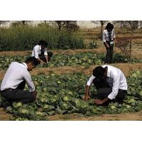 TOP B.Sc AGRICULTURE COLLEGE IN UTTARAKHAND