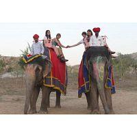 Elefanjoy Jaipur| Amer fort Elephant Ride