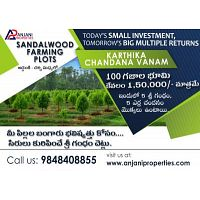 "Ready to invest - ""SANDALWOOD PLANITATION"" 100 Sq yard plot in Anjnani Properties."