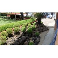 Landscape services in Kerala