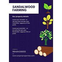 Donakonda Real Estate - Sandalwood Tree Cultivation
